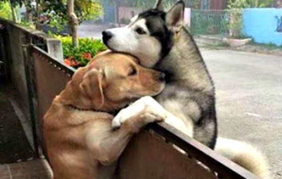 dogs communicate through barking become best friends
