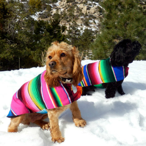 Baja Pet Ponchos Made from Serape Blankets: Baja Poncho & dog image via Baja Poncho