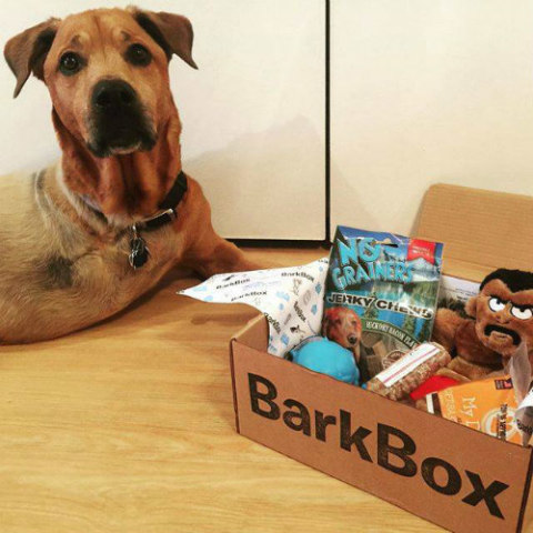 BarkBox Delivers Monthly Toys, Treats And Gadgets Right To Your Door: BarkBox Image via BarkBox Facebook