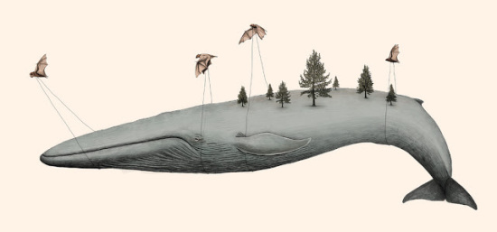 Bats and Whale Art by Barouch: Not something you'll see on the Discovery Channel any day soon!
