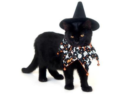 Beautiful Black Cat: Source: Thinkstock.com