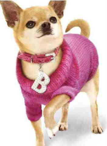Legally Blond Dog Outfit