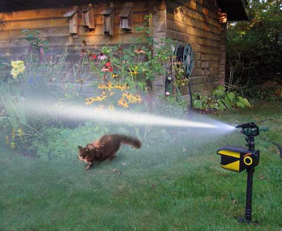 Scarecrow Motion Activated Sprinkler Deters Destructive