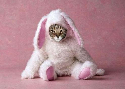 Tabby Cat in Full Bunny Suit: Source: HerCampuslife.com