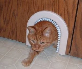 Cat Door Idea #5: The Brushing Cat Door & 10 Truly Amazing Cat Doors And Entryways | Petslady.com Pezcame.Com