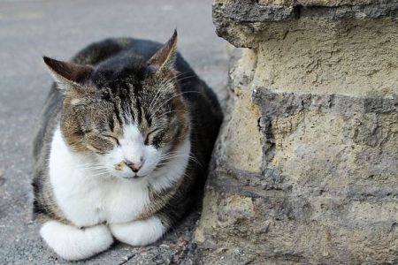 Cat in Largo di Torre Argentina (Photo by Andou/Creative Commons via Wikimedia)