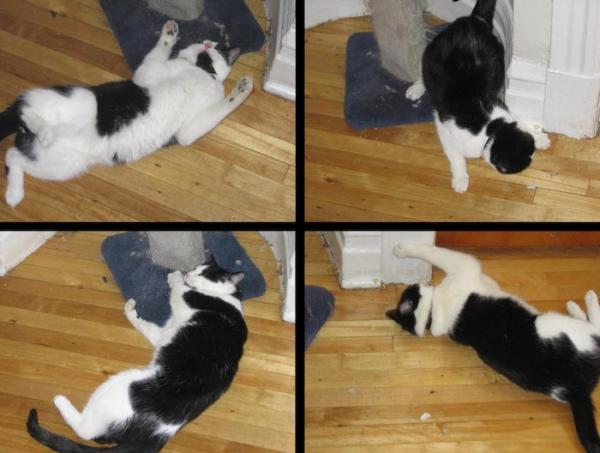 Effects of catnip