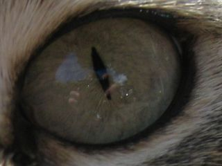 Cats Eye: Image by Mararie, Flickr