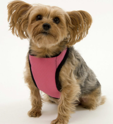 Kumfy Tailz Warming & Cooling Harnesses: Cool gel harnesses help prevent heatstroke in pets