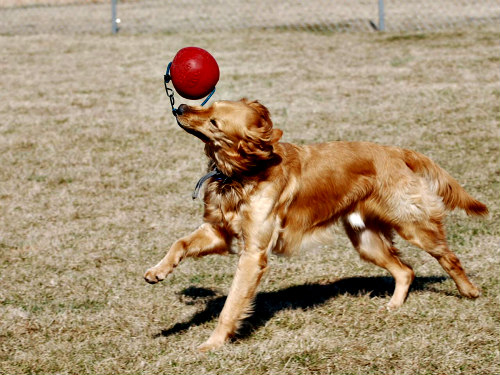 Dog Parks & Dog Toys Can Help Wear Your Pooch Out: Keep your dogs active
