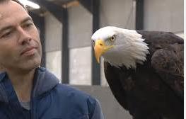 Dennis Janus & Drone-preying Eagle