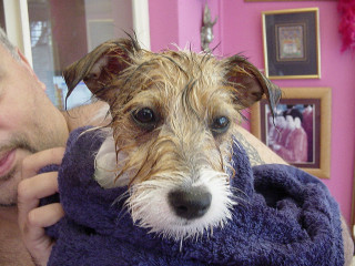 The Best Way To Wash A Dog Tips Tricks and Hacks Petsladycom