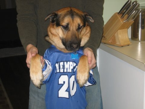 German Shepherd in football costume: image via freefantasyfootballpicks.com