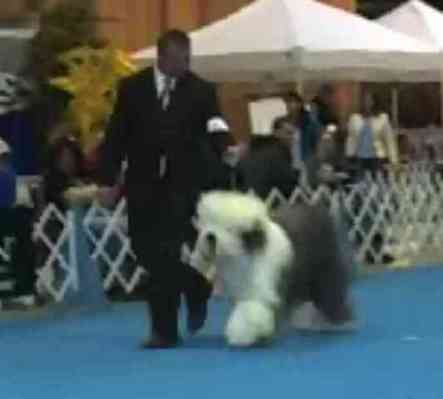 Rocky Mountain Cluster Dog Show (You Tube image)