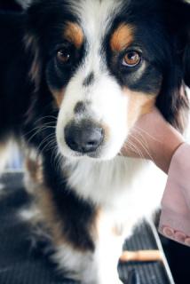 Dog: Image by Powazny, Flickr