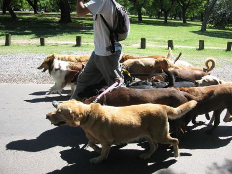 Dog Walker in Argentina (Photo by revolution cycle/Creative Commons via Wikimedia)