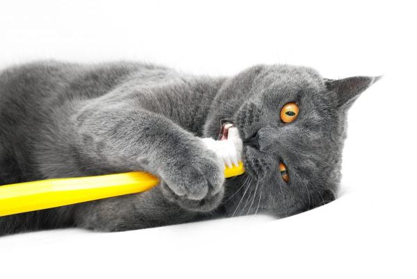 Cat chewing on a toothbrush