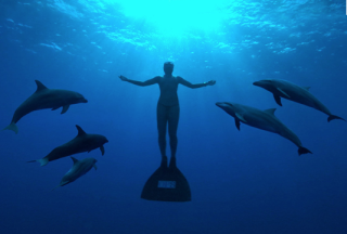 Dolphins & Man