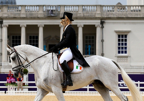 Not sure if this is Mitt Romney's wife's horse?