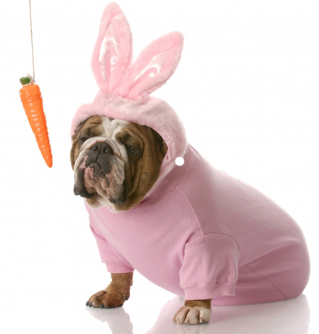 Bulldog and Carrot: Source: HerCampuslife.com