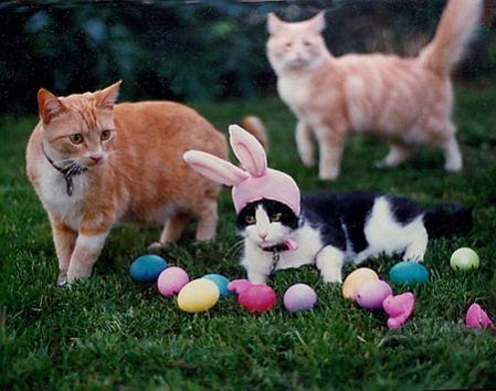 Cats Playing With Easter eggs: Source: HerCampuslife.com