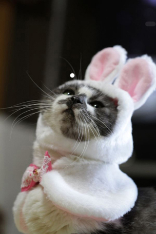 Cat Praying in Easter Bunny Costume: Source: HerCampuslife.com