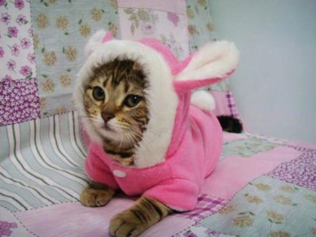 Cat Tolerating Easter Bunny Costume: Source: HerCampuslife.com