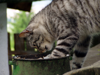 Eating Cat: Image by Oranje88, Stock.Xchng