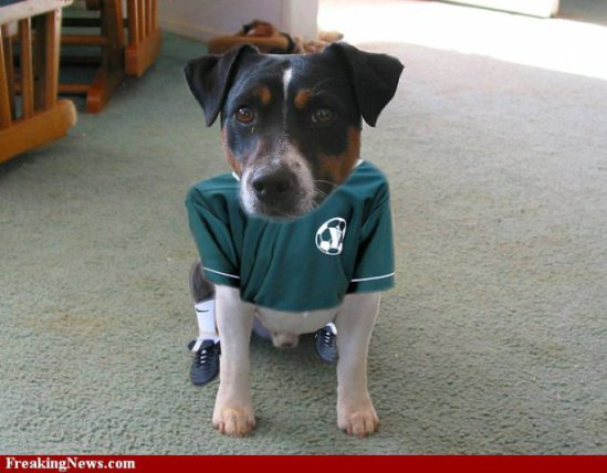 Beagle in petite size football costume: image via freakingnews.com