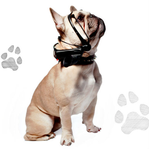 French Bulldog Wearing the No More Woof Headset: Translate animal thoughts into human words
