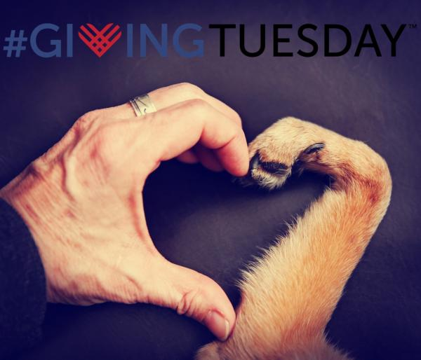 Animals Benefit Twofold On #Giving Tuesday