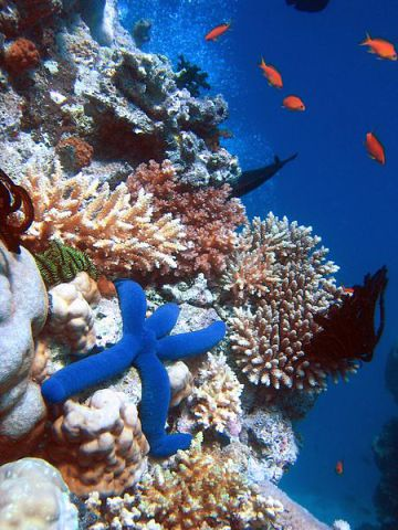 Great Barrier Reef (Photo by Richard Ling/Creative Commons via Wikimedia)