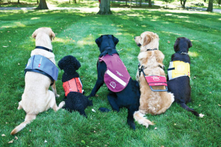 Five Service Dogs in Their Different Vests (Photo by Dogguides/Creative Commons via Wikimedia)