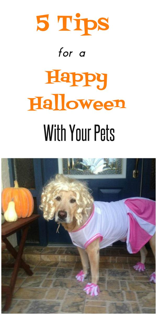 Happy Safe Halloween With Pets