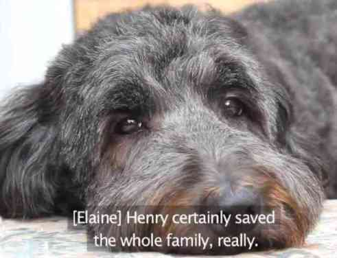 Henry the Hearing Dog (You Tube Image)