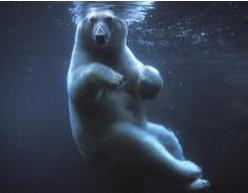 Herman, the Bipolar German Bear?