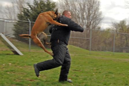 Police Dog Training (Public Domain Image)