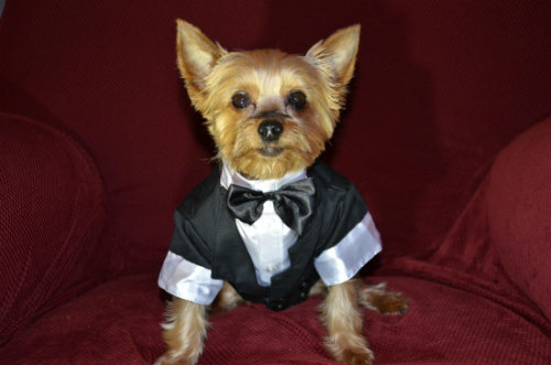 Holiday & Formal Attire in Pet Fashions: Puttin' on the Ritz