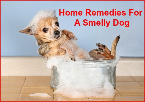 home remedies for smelly dog