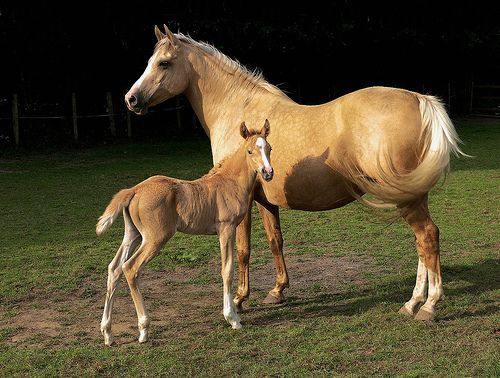 In most cases, the cloned horse would breed, but not train.