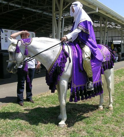 Arabian horse in Arabian attire (Photo by Cgoodwin/Creative Commons via Wikimedia)