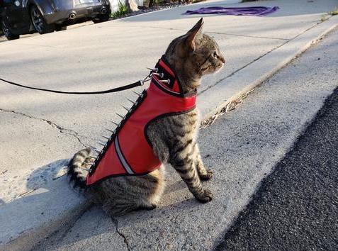 https://www.coyotevest.com/collections/coyotevest-starter-pack/products/feline-spikevest