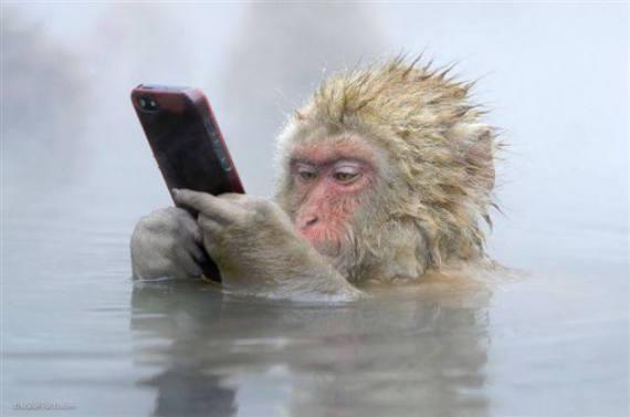 Monkey on a Cell Phone (Image via I Love Christmas)