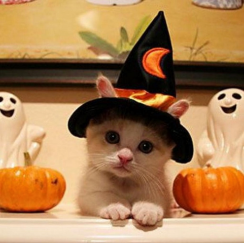 Witch's Cat (Image via I Love Halloween)