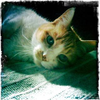 Joe D Cat: Image by Foraged Design, Flickr