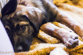 Jovi: Image by Through the Lens of Kimberly Gauthier, Flickr