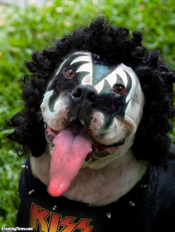 Amazing Animals Who Look Like KISS's Gene Simmons