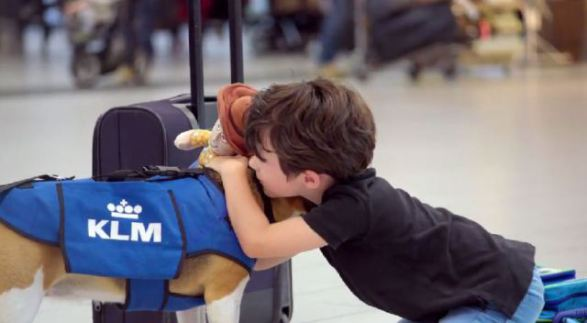The KLM Airline Dog Receiving a Thank You (You Tube Image)