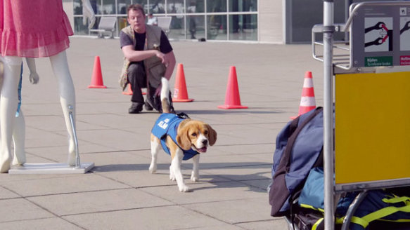 The KLM Airline Dog in Training (You Tube Image)