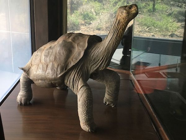 Lonesome George On Display, Charles Darwin Research Center